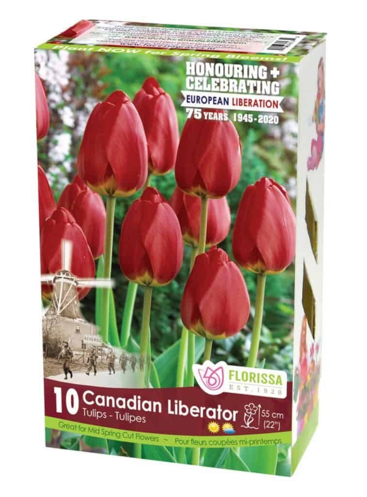 The Canadian Liberator Tulip