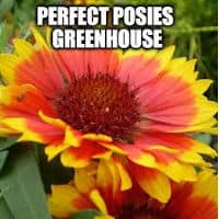 Perfect Posies Greenhouse